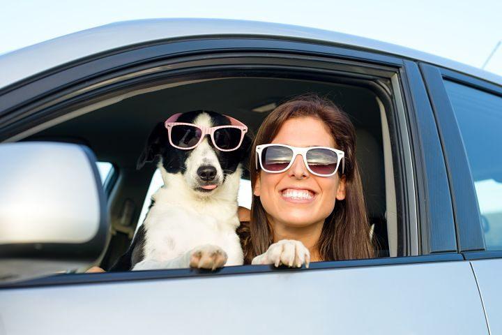 viajar con mascotas - evitar las multas